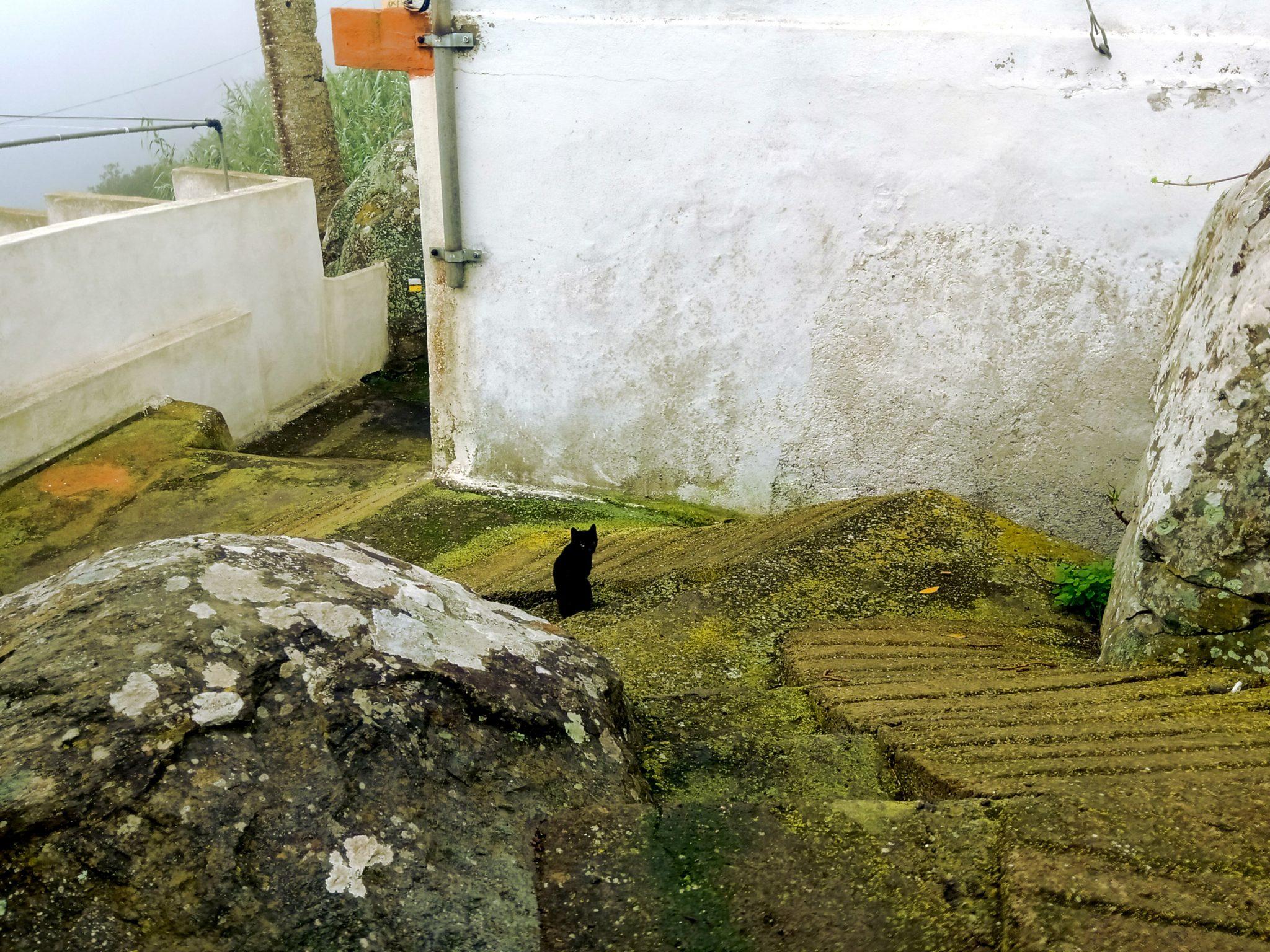 Die schwarze Katze von der Hexe