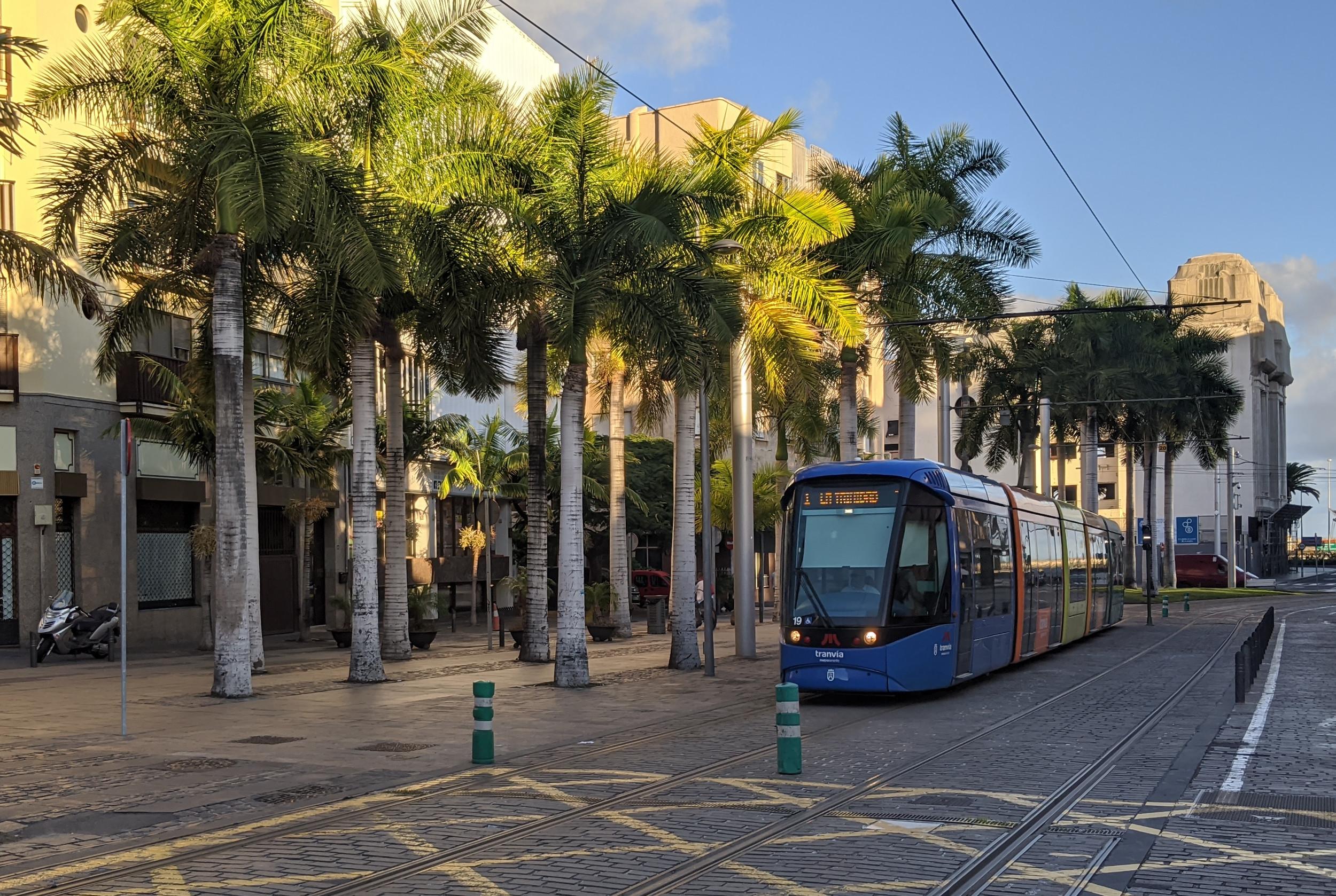 tram-mit-palmen.jpg